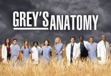 Anatomy fan