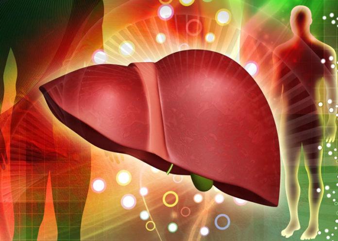 Reinforces the Liver