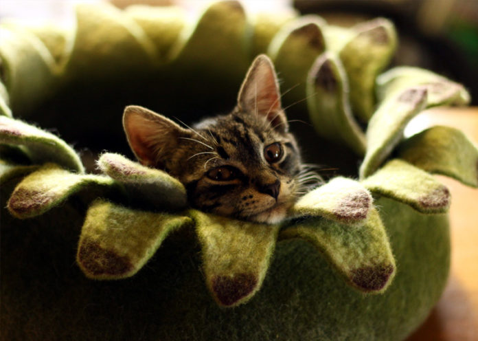 Nurturing Space For Your Cat