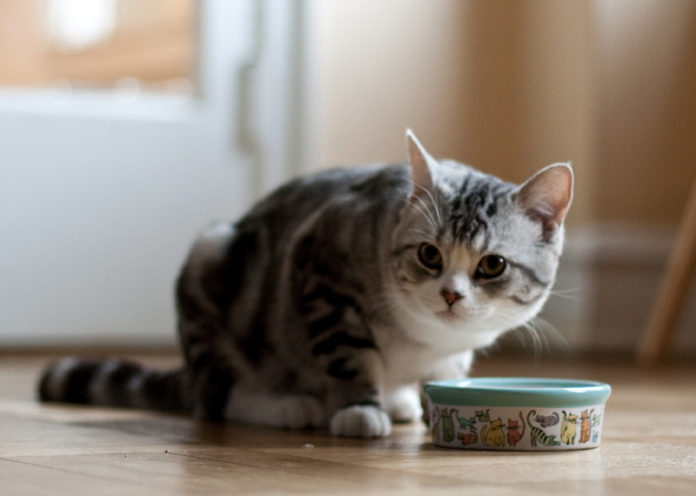 Learn what your cat needs to eat
