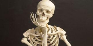 Super Foods for Bone Density