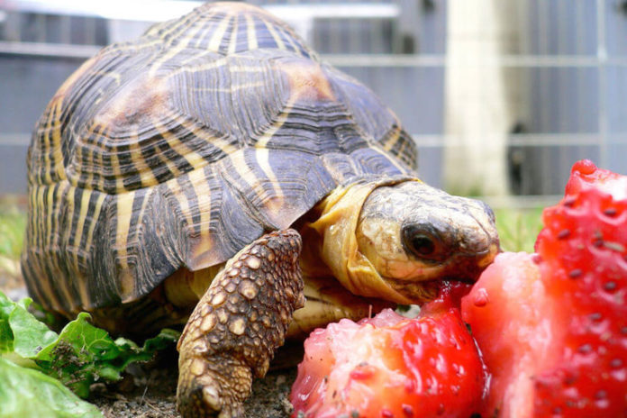Nourishing Your Tortoise