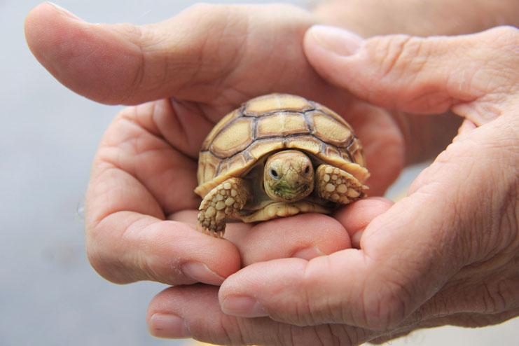 Handling Your Tortoise
