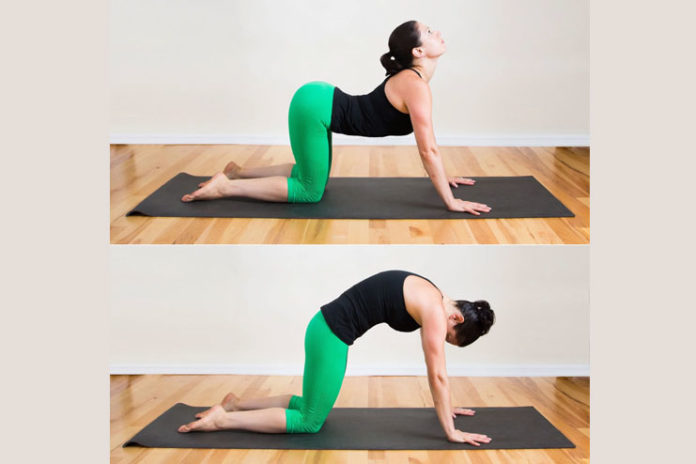 Bitilasana (Cat-Cow Pose)
