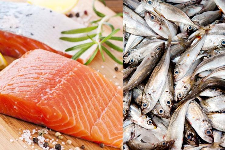 Salmon and Sardines