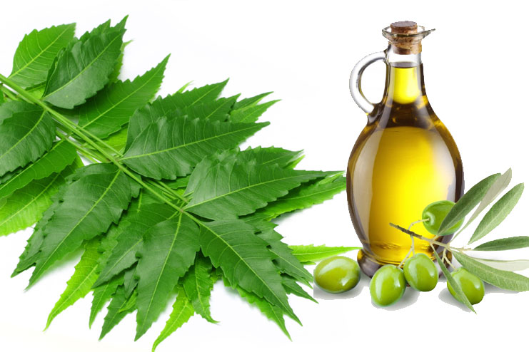 Neem and Olive Oil
