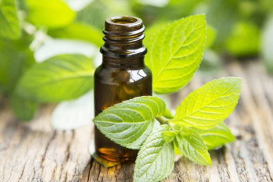 Uses And Benefits Of Peppermint Oil