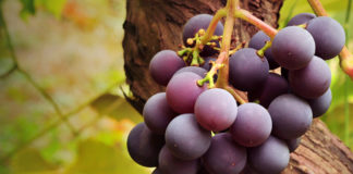Benefits Of Black Grapes