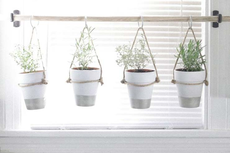 Hanging planter herbs