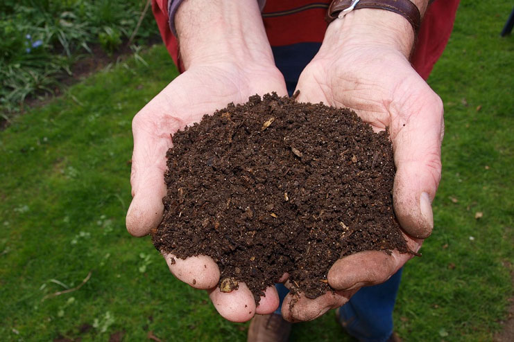 Concentrate On Good Soil And Compost