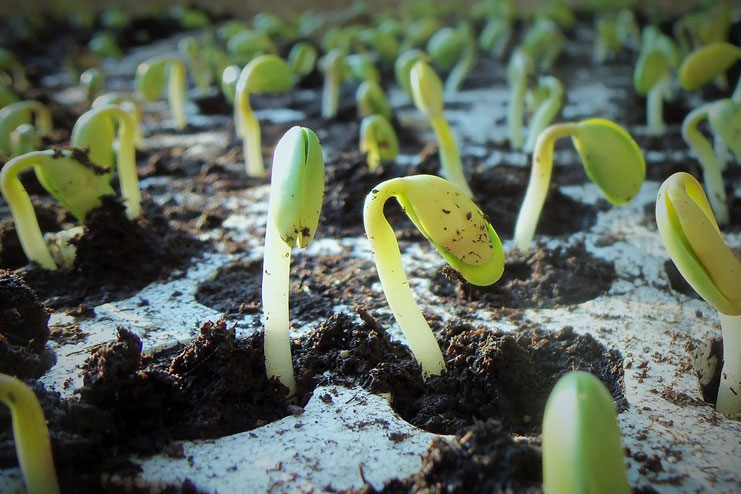 Start Seedlings First