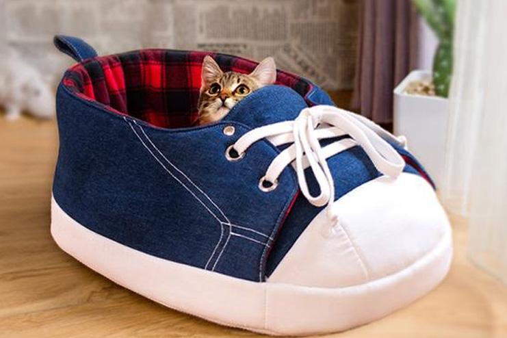 Shoe-cat-cave